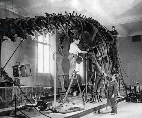 Dinosaur skeleton, 1926
