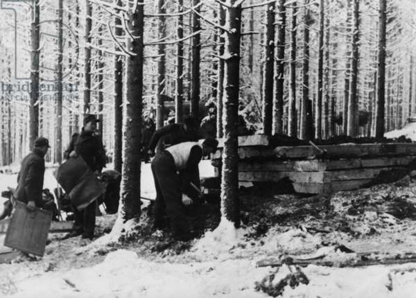 Construction of a wooden bunker during the Battle of the Bulge, 1945 (b/w photo)