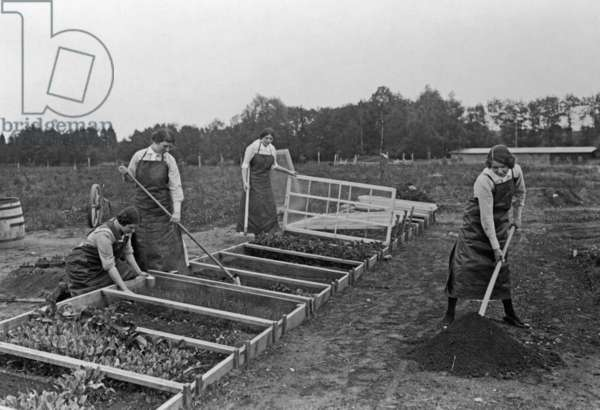 Women growing vegetables, 1914 (b/w photo)