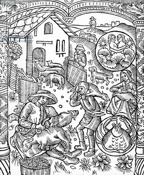 zodiac signs : Gemini and Cancer (june) : months for shearing of sheeps, engraving form the calendar of sheperds, 1529