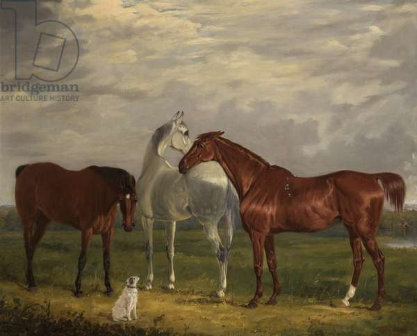 Three Horses of the 2nd Lord de Tabley and His Dog, 'Vic', 1838 (oil on canvas)
