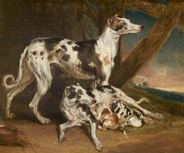 Dalmatian Dogs (oil on canvas)
