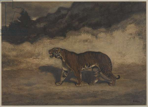 Tiger Walking to the Left (w/c on paper)