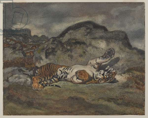 Rolling Tiger, c.1840 (w/c on paper)