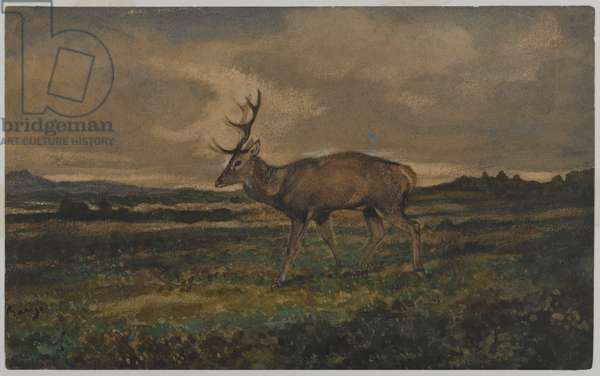 Stag Walking (w/c on paper)