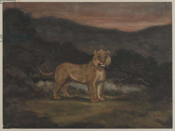 Standing Lioness (w/c on paper)