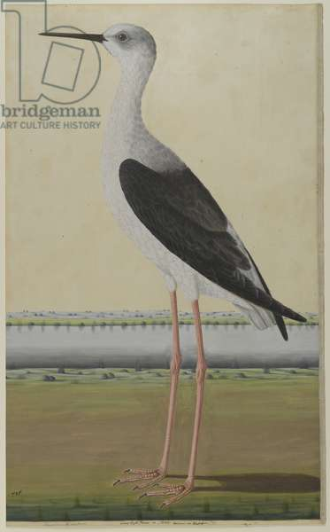 Water Bird in a Landscape, c.1780 (watercolour on paper)