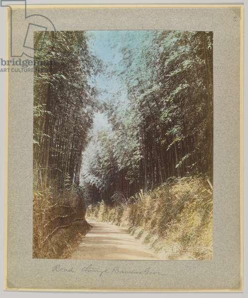 Road through a bamboo grove, Japan (hand-coloured b/w photo)
