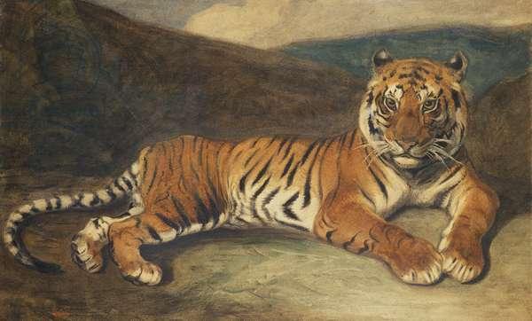Tiger Reclining (w/c on paper)