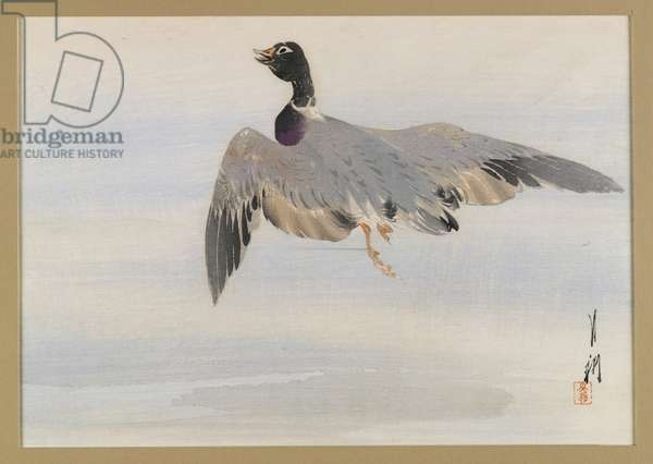 Duck Arising from the Water, album page from a Bird and Flower (Kacho) Book, c.1890-1900 (woodblock colour print with silver pigment)