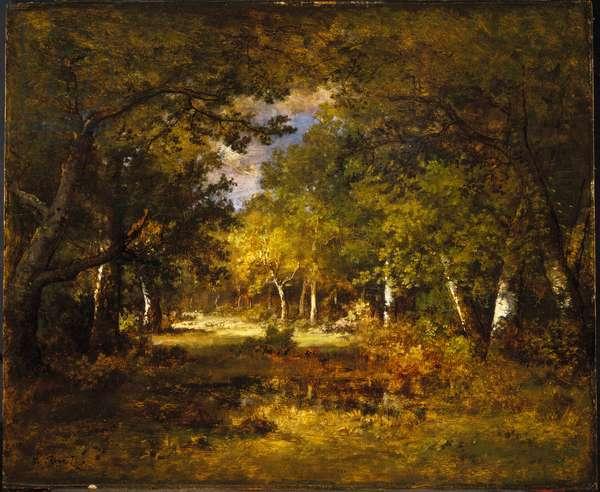 Forest Scene, c.1844-60 (oil on panel)