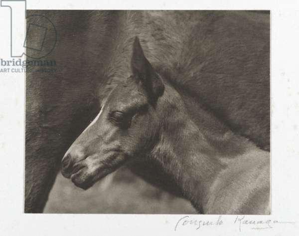 Untitled (Colt's Head) (gelatin silver print)