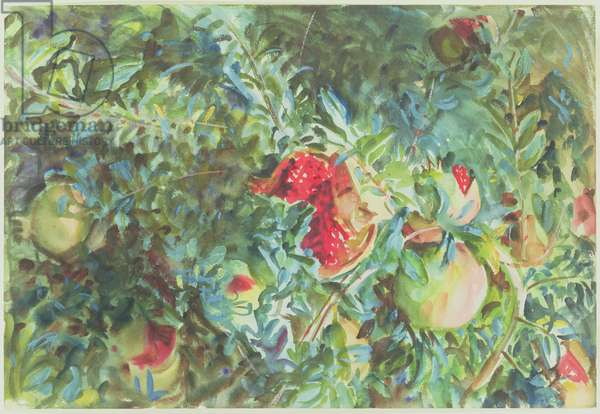 Pomegranates, 1908 (w/c over pencil on paper)