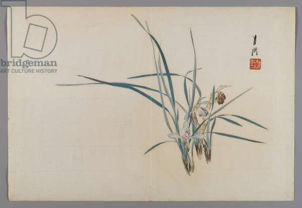 Orchids, album page from a Bird and Flower (Kacho) Book, c.1890-1900 (woodblock colour print with silver pigment)