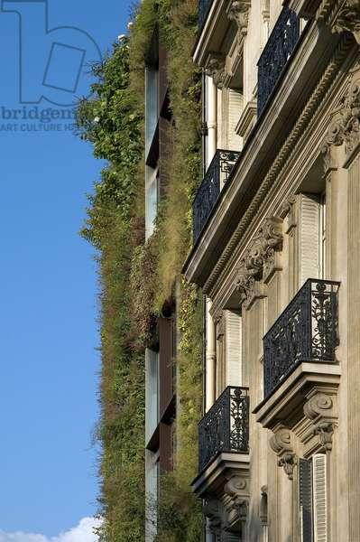 Le mur vegetal du musee des Arts Premiers, 55 quai Branly in Paris 75007. Architect Jean Nouvel, 2001-2006. Design of the wall Patrick Blanc. Photography 02/08/05