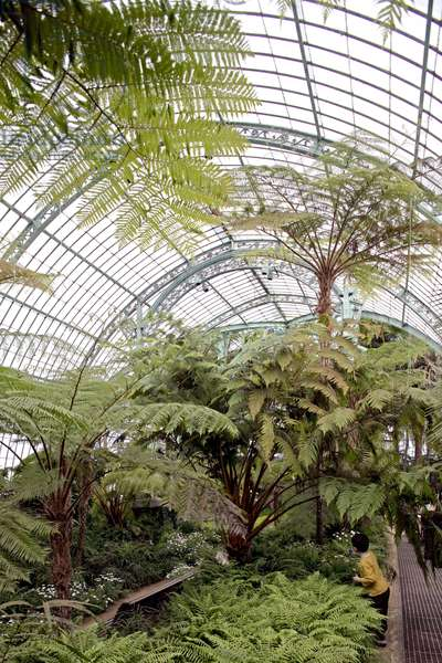 The royal greenhouses of Laeken in Belgium. Achievement 1873. In the 19th century, glass and metal, as new building materials, allowed the construction of a new type of building: the greenhouse. King Leopold II (1835-1909) entrusted the architect Alphonse Balat (1819-1895) with the construction of an ideal glass palace. Open to the public three weeks a year, the Royal Greenhouses of Laeken house an exceptional collection of plants, some dating back to Leopold II. Photography 30/04/06.