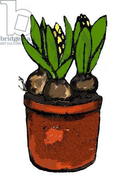 'Hyacinth in a pot' 2012 (monoprint/digital)