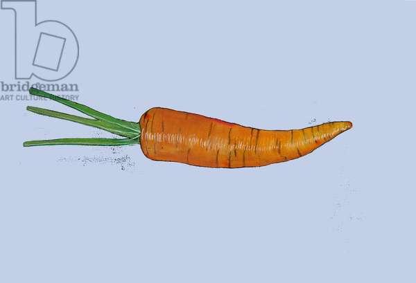Carrot 2005 (watercolour & conte crayon on paper)