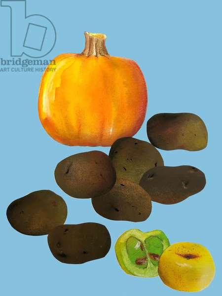 Fruit & veggies vegetables,2020,cutout
