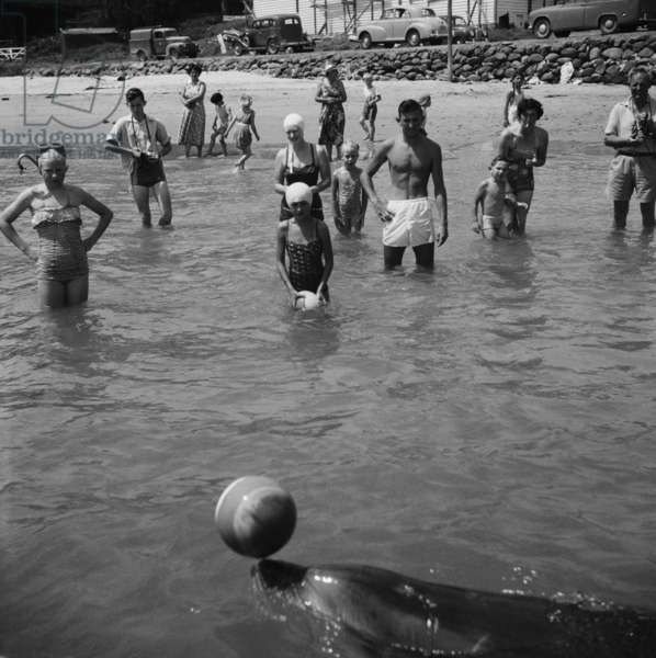 Opo the dolphin, Opononi, 1955-56 (b/w photo)