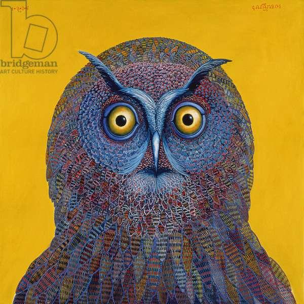 Long-eared Owl, 1996