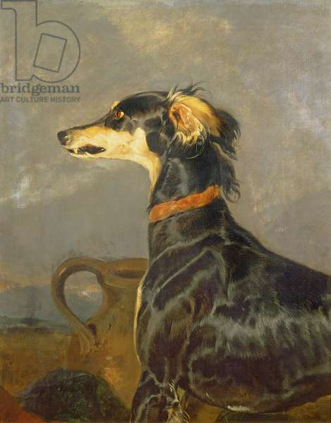 Queen Victoria's Favourite Dog, Eos (oil on canvas)