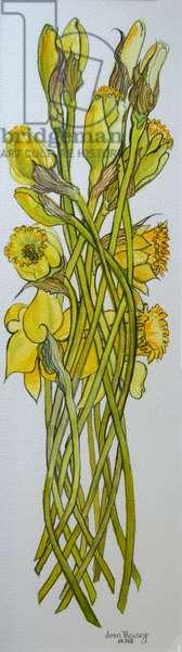Daffodils,2008, (watercolour)