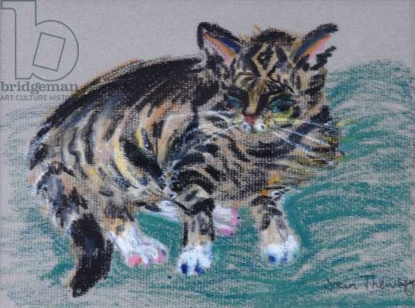Tabby Cat,2005 (pastel)