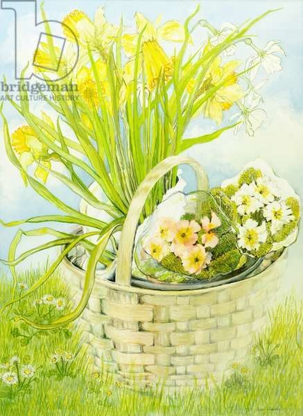 Daffodils and primroses in a basket (w/c on hand-made paper)