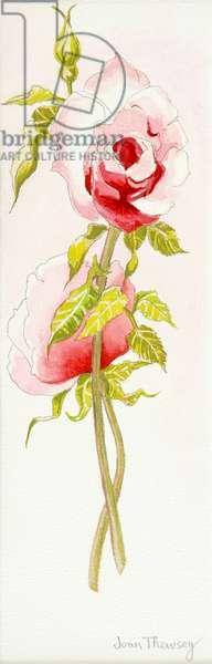 Two Queen Elizabeth Roses,2000,(watercolour)