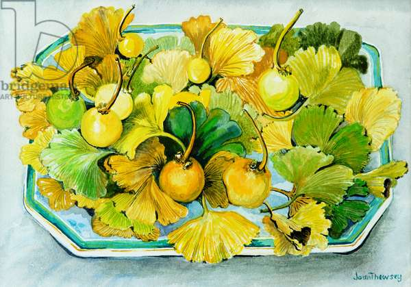 Ginkgo,fruit and Leaves,2010, watercolour
