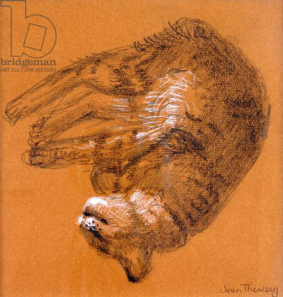 Sleeping Tabby Cat,2005,(graphite and white pastel)