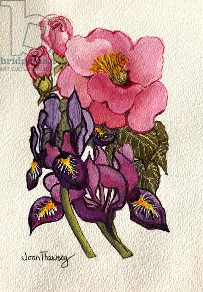 Camellia and Dutch Iris, (watercolour)