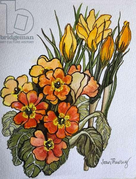 Crocus and Primroses, (watercolour)