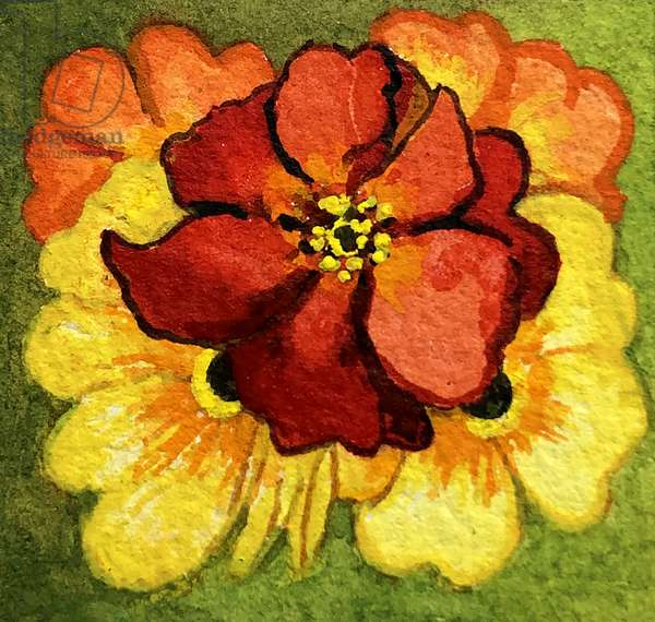 Five Primroses, red, yellow and orange (watercolour)