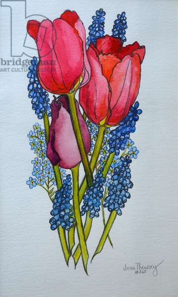Tulips, Muscari and Forget-me-nots,2002, (watercolour)