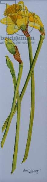 Four Daffodil Stems 2011 (w/c on paper)