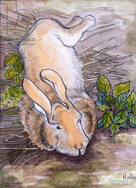 Holly,the Giant Continental Rabbit, 2002, (pencil and water colour)