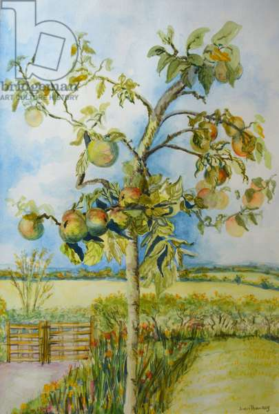 The Apple Tree,2001 (watercolour)