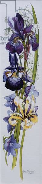 Purple and Yellow Irises with White and Mauve Campanulas,2013, (w/c on handmade paper)