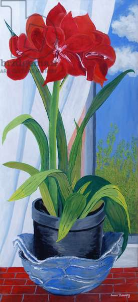 Amaryllis in a Blue Bowl 2011  (gouache on paper)