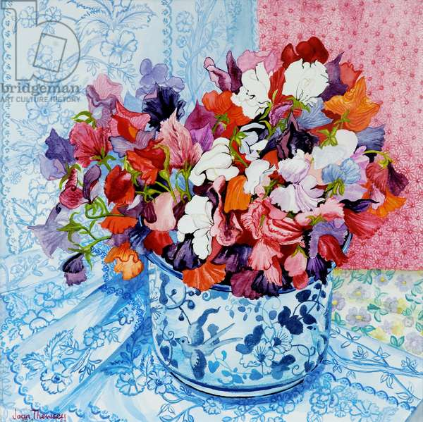 Sweet Peas in a Blue and White Pot,2010,watercolour