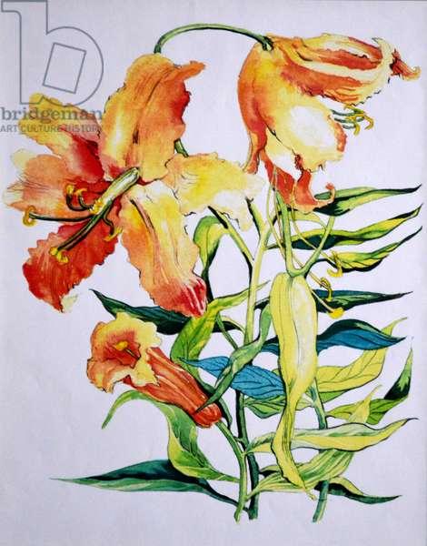 Orange Lilies 1,1985 (watercolour)