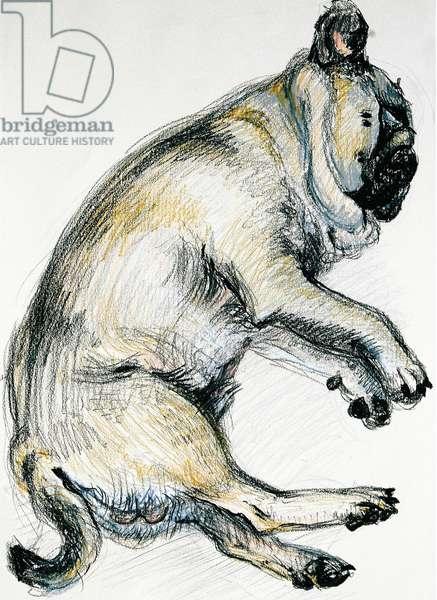 Sleeping Pug One, 2000, (oil pastel)