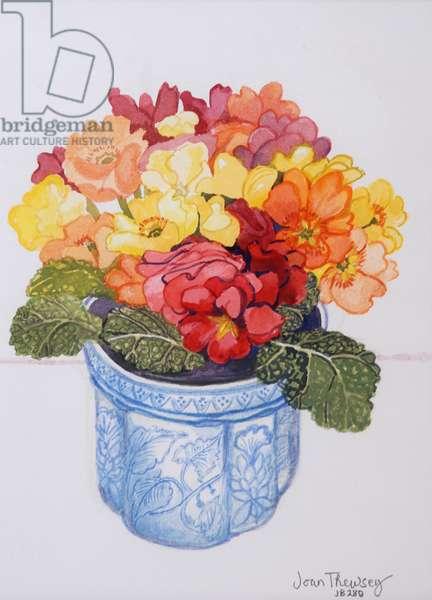 The Multicoloured Primrose 2011 (watercolour on paper)