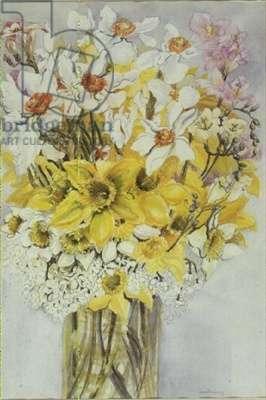 Daffodils and Narcissi (w/c)
