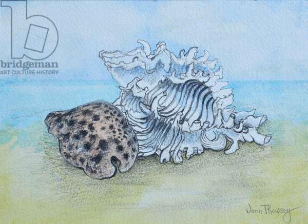 Two Seashells (pencil and watercolour wash)