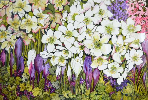Spring Border: Hellebores, Crocus and Violets, (watercolour)