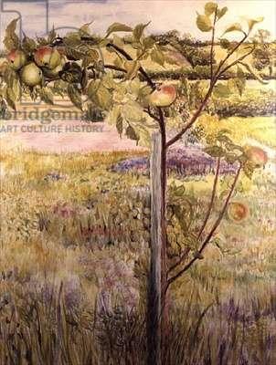 Apple Tree in a Suffolk Landscape (w/c)