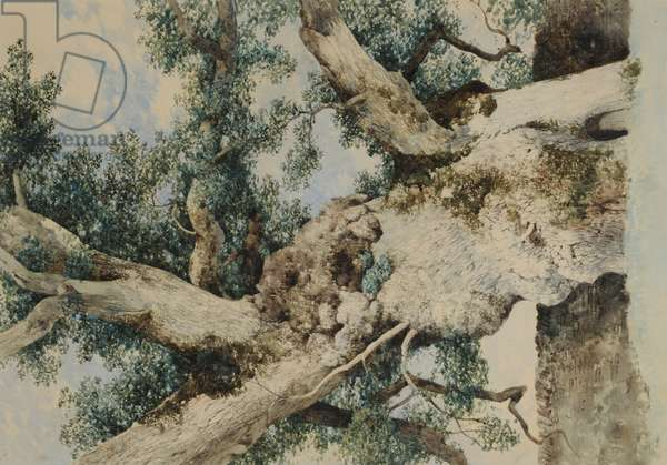 Study for Tree in 'The Rookery', c.1854 (w/c on paper)
